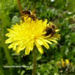 Abeille/Malay PHCAR/M7France.fr